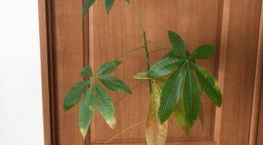 お家の中の植物の生命力に感嘆