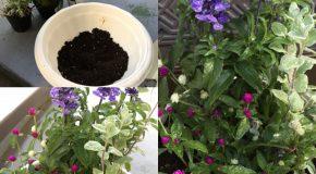 素敵活動で寄せ植えにチャレンジ&桜のぷち片づけ